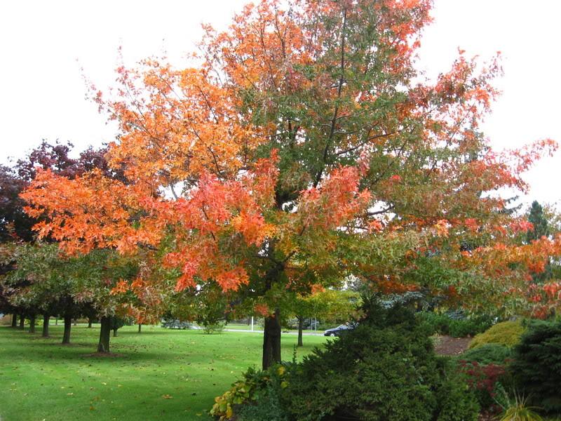 Pouver vous identifier ces arbres (jeux) IMG_24901