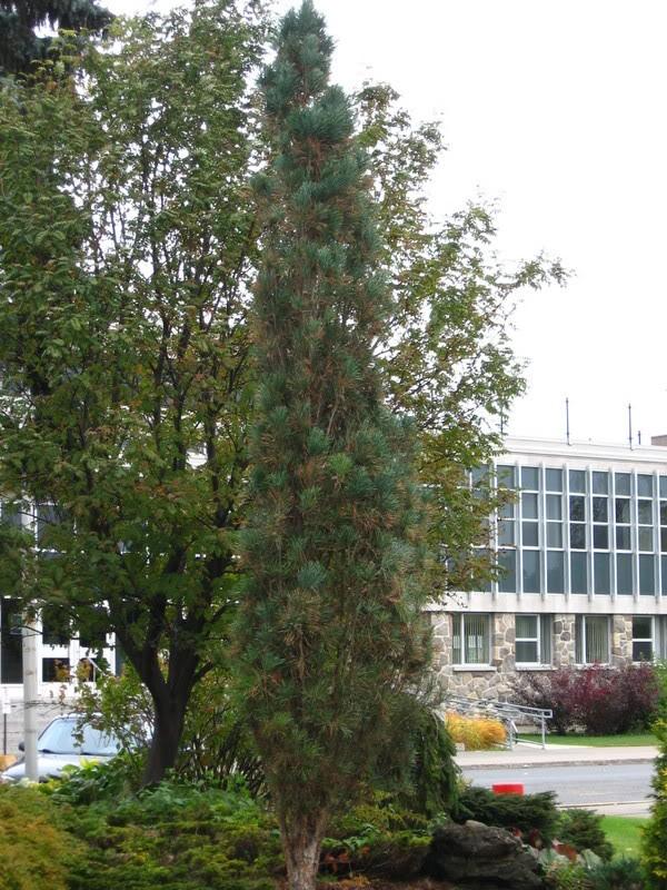 Pouver vous identifier ces arbres (jeux) IMG_24911