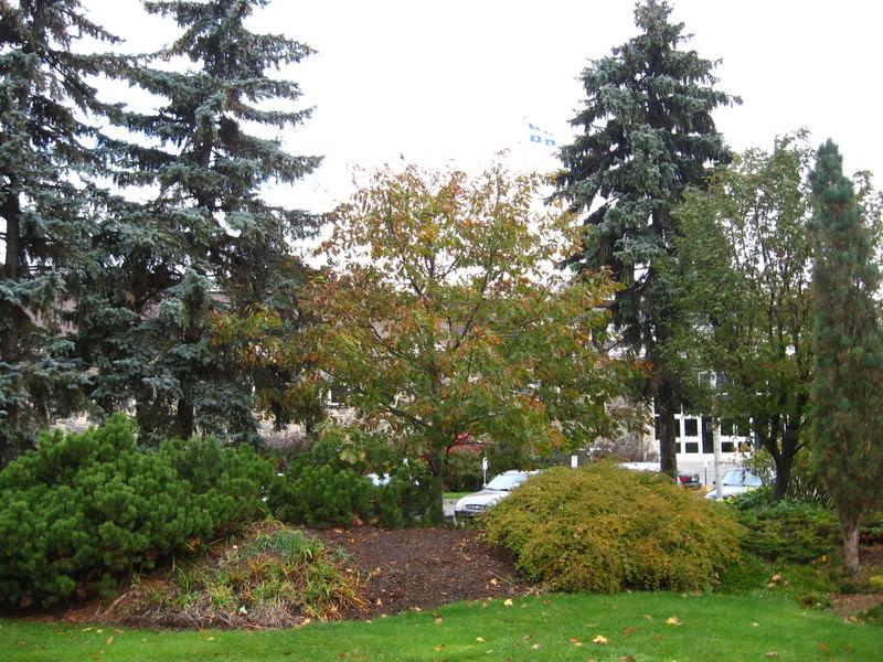 Pouver vous identifier ces arbres (jeux) IMG_24921