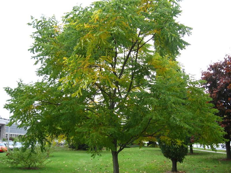 Pouver vous identifier ces arbres (jeux) IMG_24931