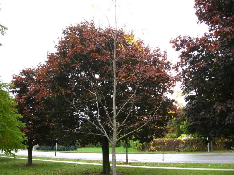 Pouver vous identifier ces arbres (jeux) IMG_24941