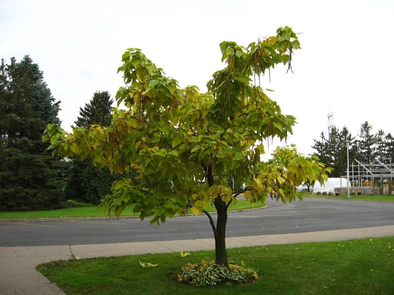 Pouver vous identifier ces arbres (jeux) IMG_24981