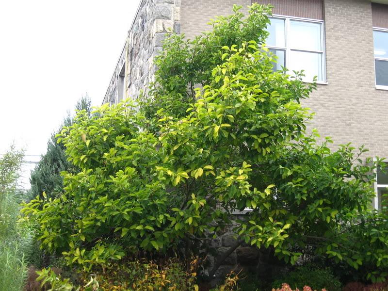 Pouver vous identifier ces arbres (jeux) IMG_25001