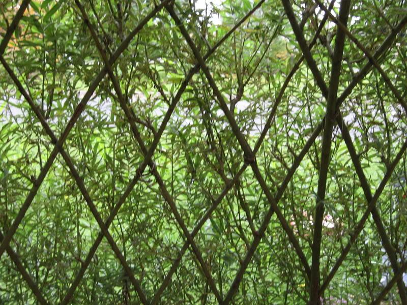 Pouver vous identifier ces arbres (jeux) IMG_25071-1