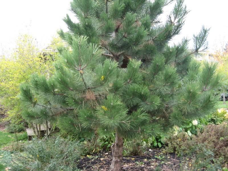 Pouver vous identifier ces arbres (jeux) IMG_25131