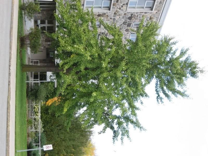 Pouver vous identifier ces arbres (jeux) IMG_25141