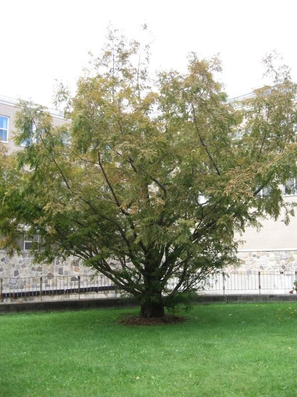 Pouver vous identifier ces arbres (jeux) IMG_25171