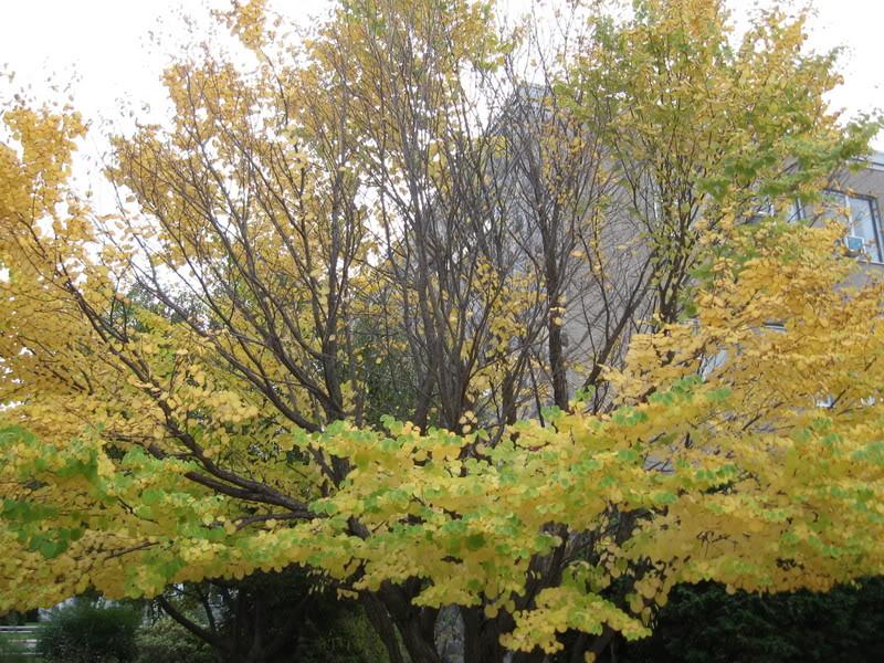 Pouver vous identifier ces arbres (jeux) IMG_25211