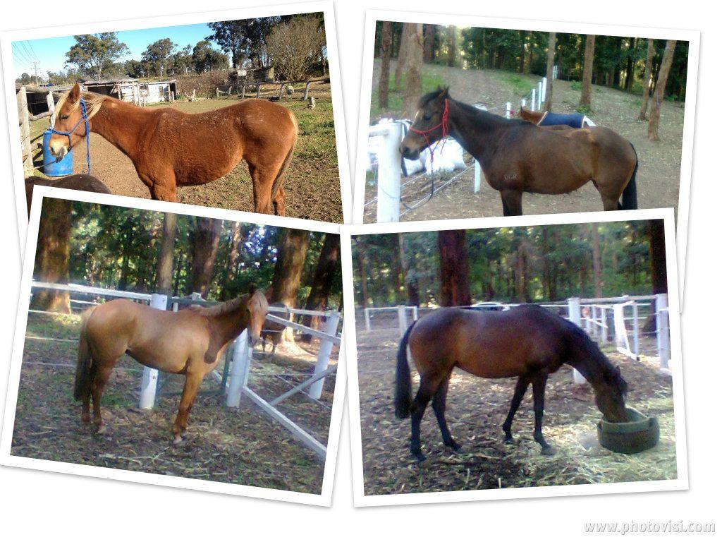 Cazedarnes Equestrian 214f9266-851c-4949-92f3-e759437def7cwallpaper