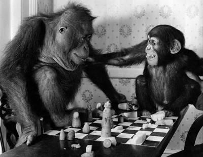The New Chess Thread! Monkey