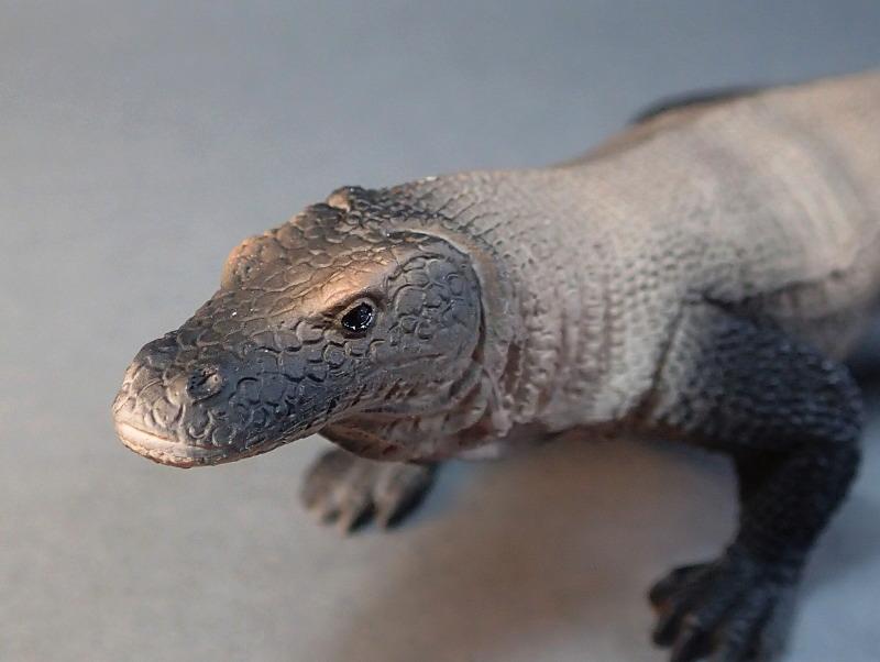 Mojo Komodo dragon, - new for 2014. PA010033_zpsa0ccba18