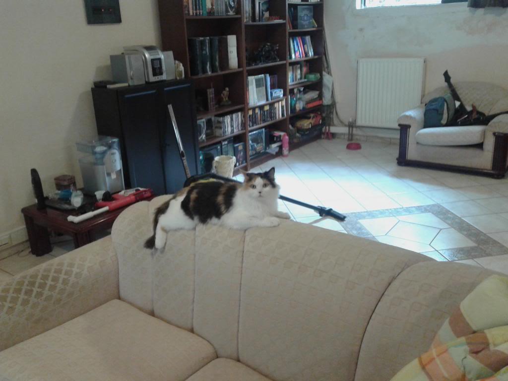 πρεπει να βρω γονεις για τις γατες μου.. - Σελίδα 2 20131016_143132_zps42a438ea
