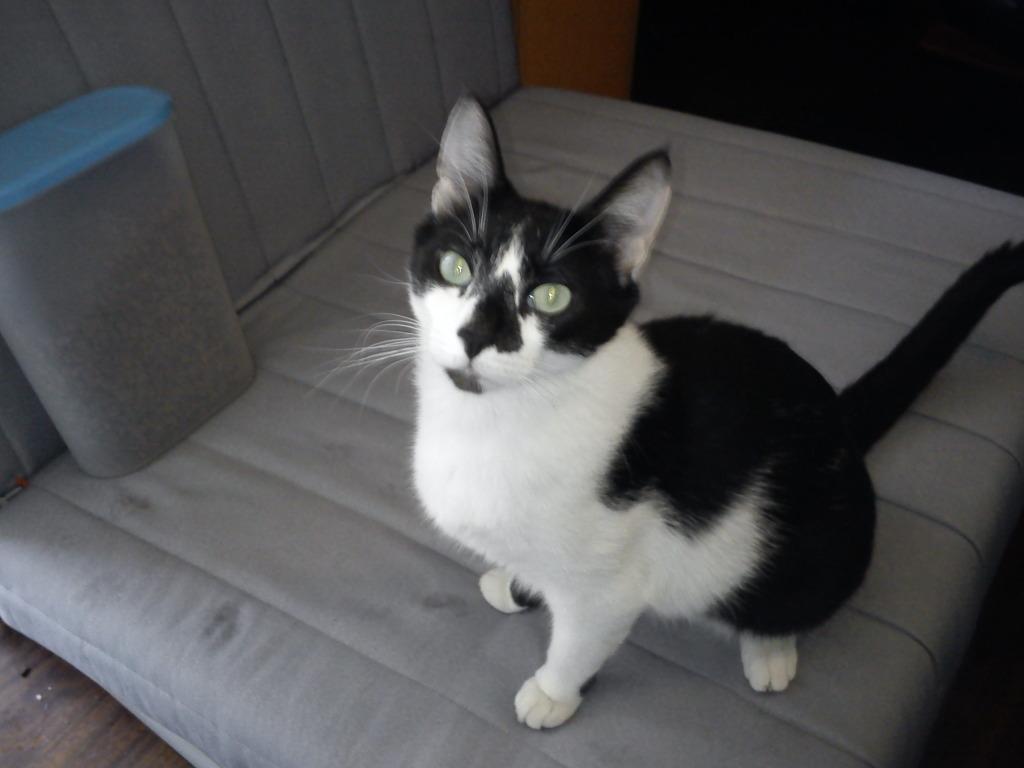 πρεπει να βρω γονεις για τις γατες μου.. DSC00090