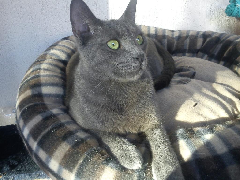 πρεπει να βρω γονεις για τις γατες μου.. DSC00091