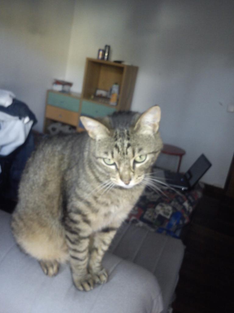 πρεπει να βρω γονεις για τις γατες μου.. DSC00106