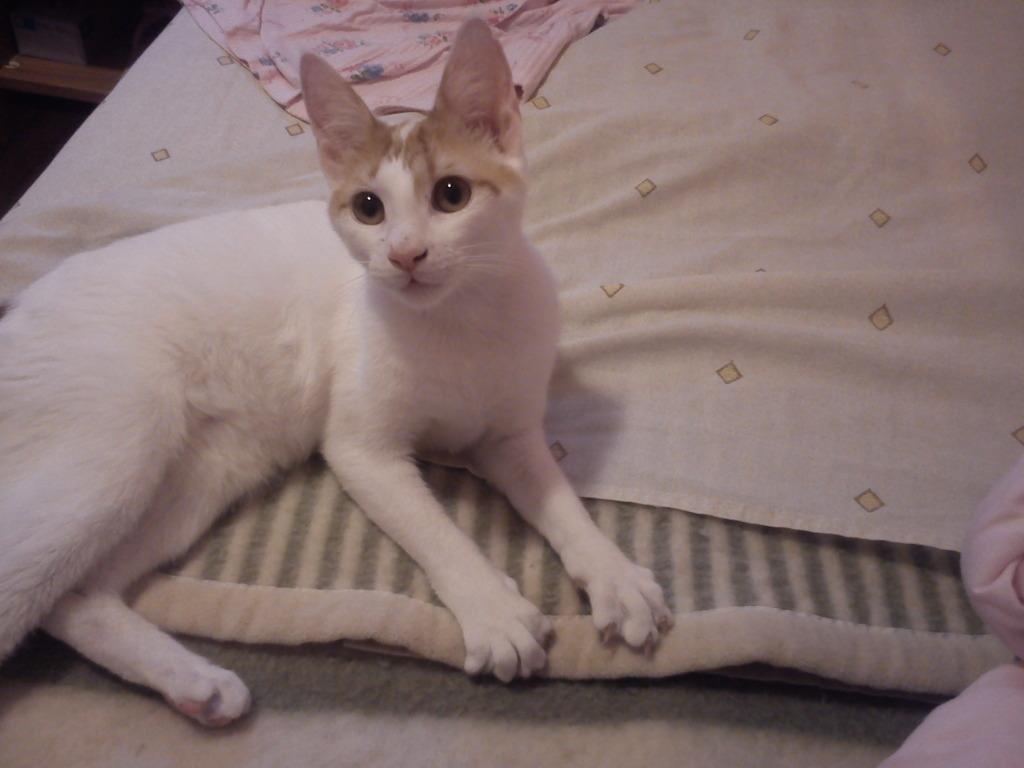 πρεπει να βρω γονεις για τις γατες μου.. DSC00127