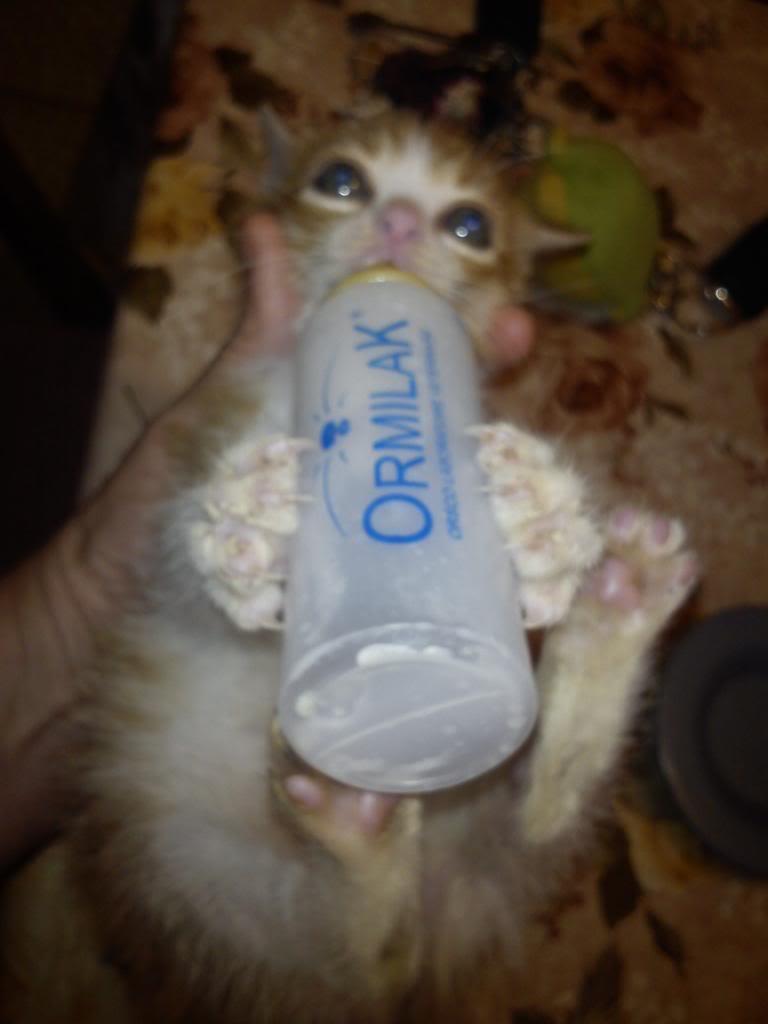 πρεπει να βρω γονεις για τις γατες μου.. - Σελίδα 2 DSC00229