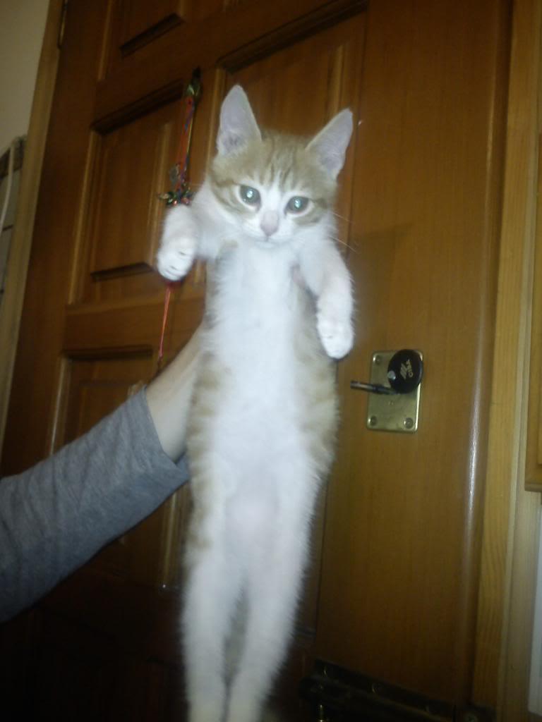 πρεπει να βρω γονεις για τις γατες μου.. - Σελίδα 2 DSC00245_zps6cac2b8e