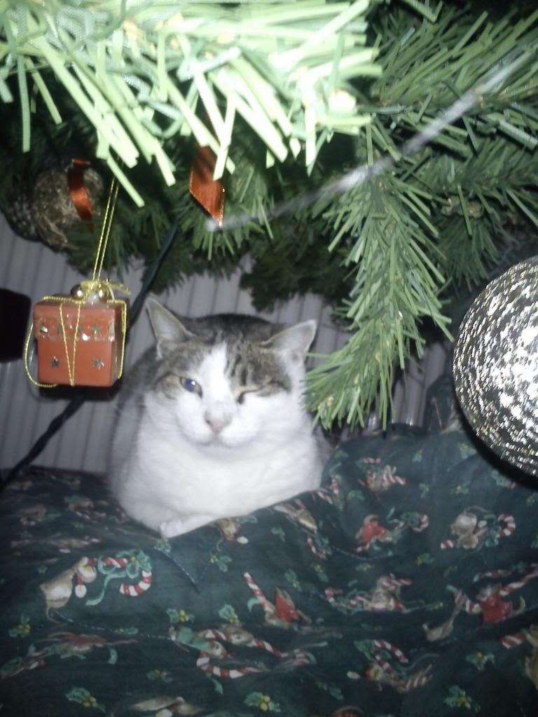 Merry Cat-mas! DSC00277_zpsd2359fea