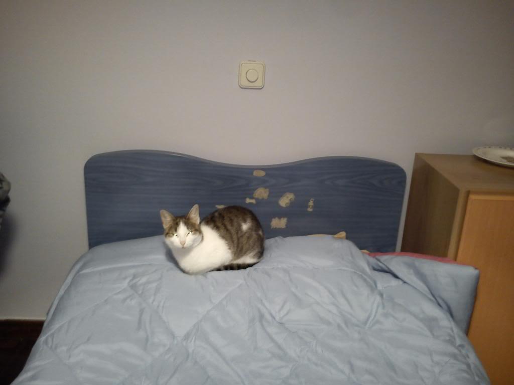 πρεπει να βρω γονεις για τις γατες μου.. DSC00291_zps3a331c24
