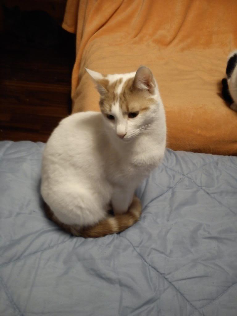 πρεπει να βρω γονεις για τις γατες μου.. - Σελίδα 2 DSC00304_zps928ed51f