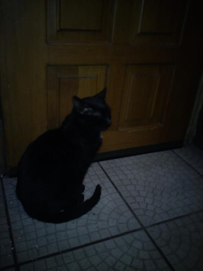 πρεπει να βρω γονεις για τις γατες μου.. DSC00365_zpsdd009752