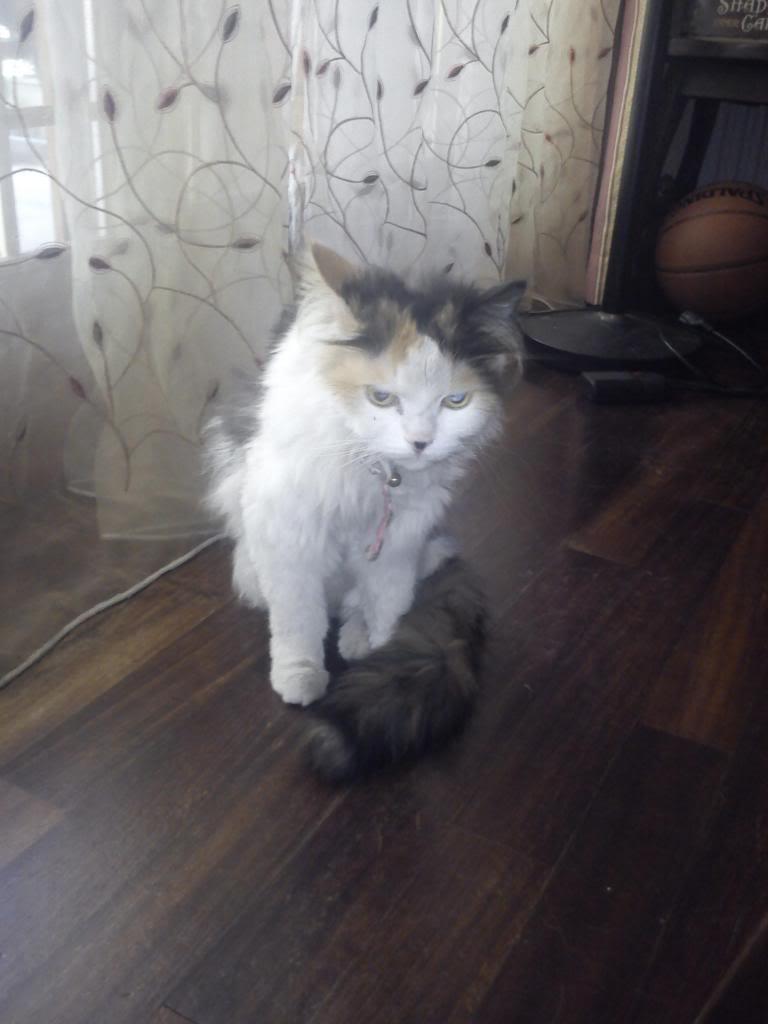 πρεπει να βρω γονεις για τις γατες μου.. DSC00515_zps9b718e9f