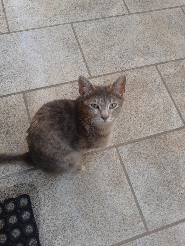 Γάτα θηλυκιά  Phiomegatauomicrongammarhoalphaphialpha0005_zpsv4lzwlxo