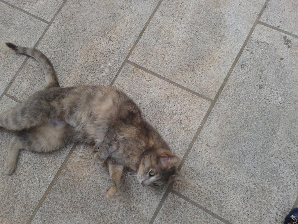Γάτα θηλυκιά  Phiomegatauomicrongammarhoalphaphialpha0006_zpsdgt9gu6w