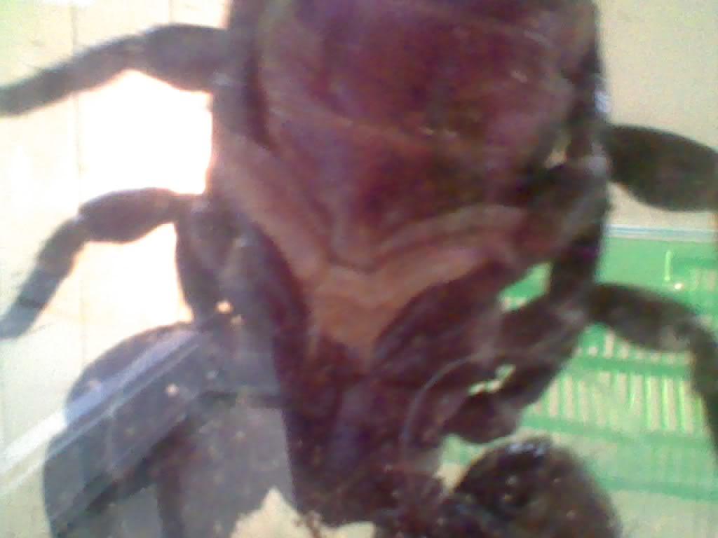male or femail? Img0002_07-03-2012