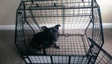 Barjo car cage Th_IMAG0089_zpsksdln4pq