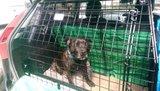 Barjo car cage Th_IMAG0095_zpsk1s4zu0p