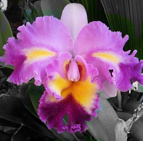 கண்னைக் கவரும் மலர்கள். - Page 3 Orchid