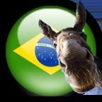 PERDA DE CHAVE Brazil_Burro