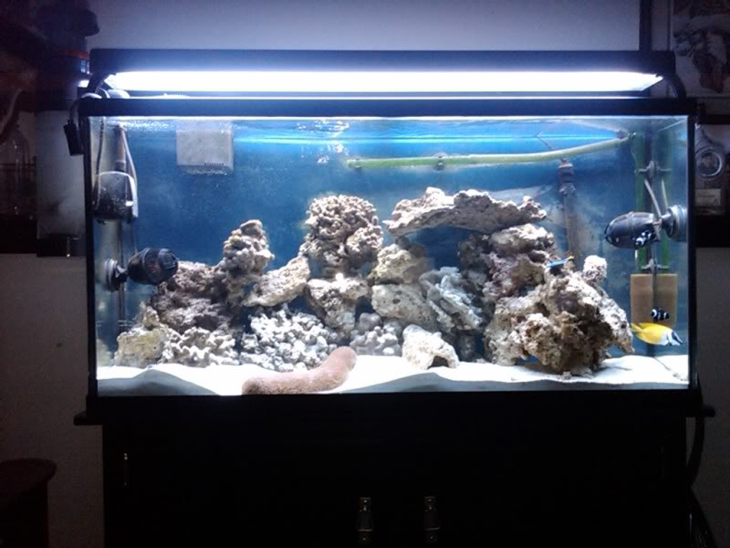 65 Gal. reef build - Page 2 IMG00065-20090602-2016