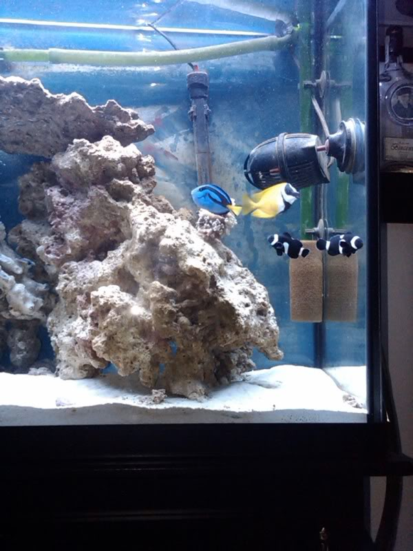 65 Gal. reef build - Page 2 IMG00067-20090602-2017