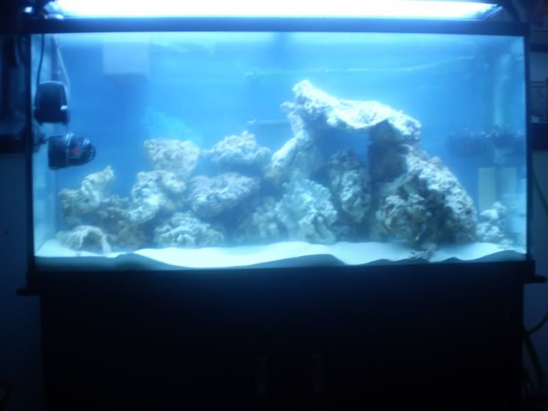 65 Gal. reef build P5190036