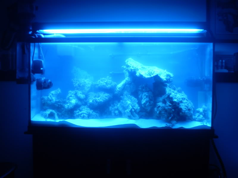 65 Gal. reef build P5190042