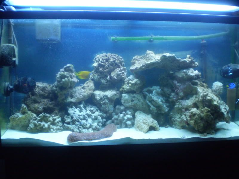 65 Gal. reef build P5300087