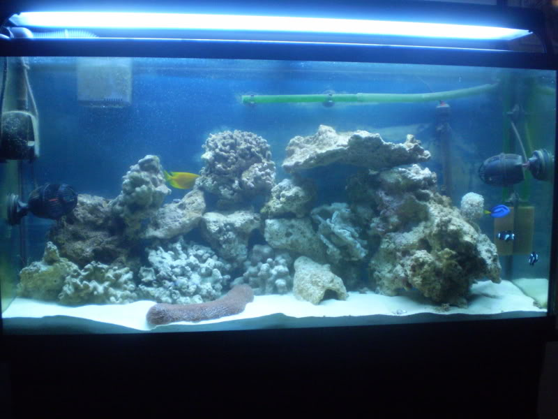 65 Gal. reef build P5300088