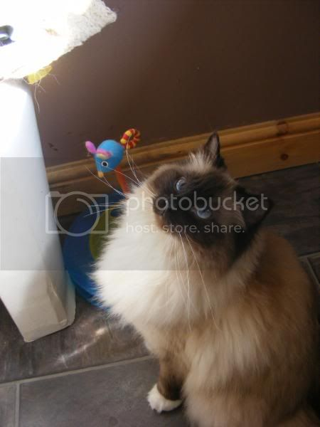 Blue,Coco,Sakina & Simba 004-3
