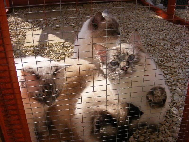 Blue,Coco,Sakina & Simba 011-1