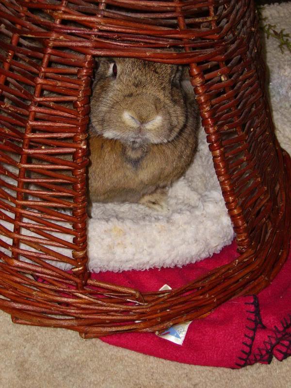 Rabbit items on eBay PICT0227rotrep