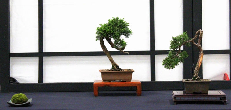 Dragon Bonsai at the Welsh Game Fair June 15th and 16th IMG_6371