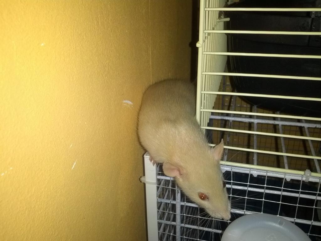 Mes 3 ratounes tant attendues IMG_20120825_174405