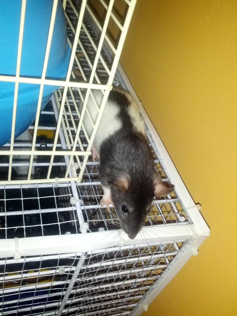 Mes 3 ratounes tant attendues IMG_20120825_175316