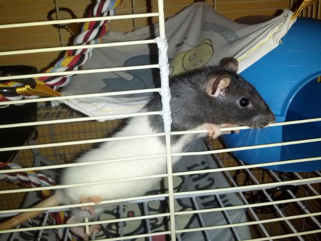 Mes 3 ratounes tant attendues IMG_20120826_225240