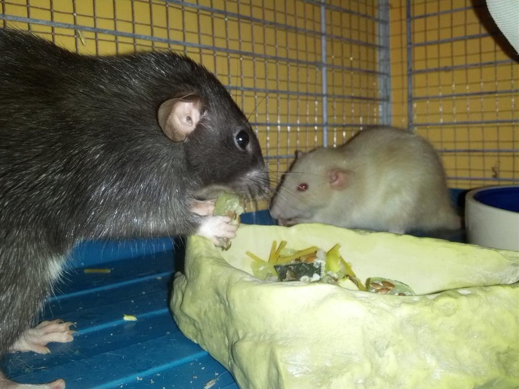 Mes 3 ratounes tant attendues IMG_20120907_215003