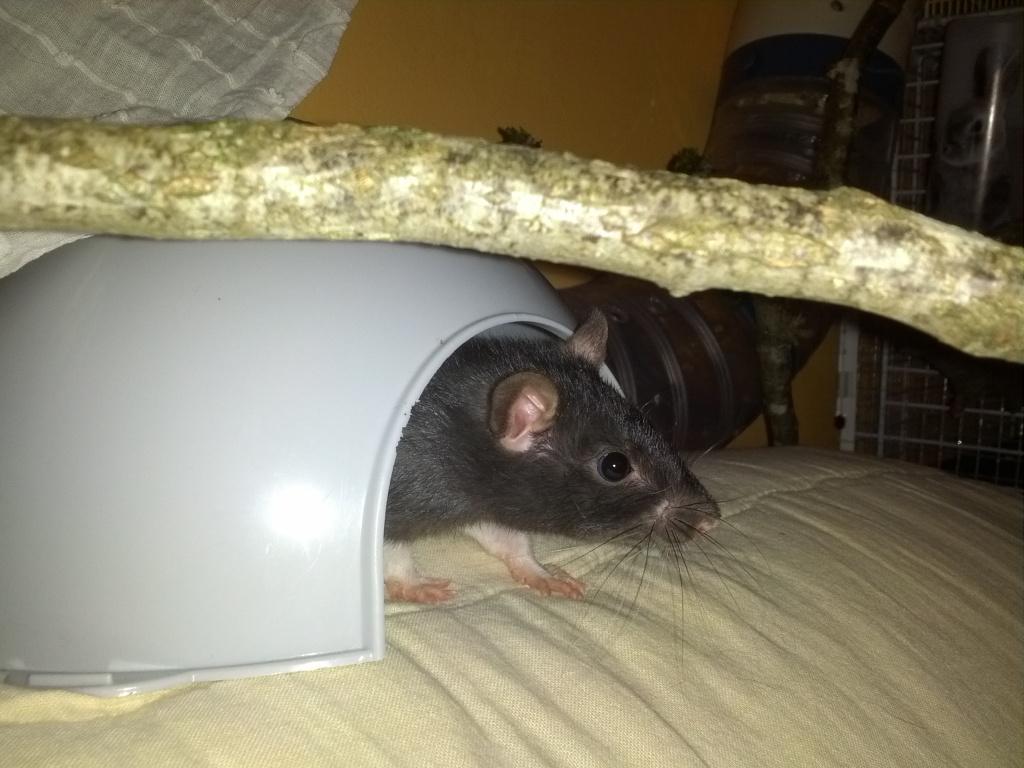 Mes 3 ratounes tant attendues IMG_20120908_211443