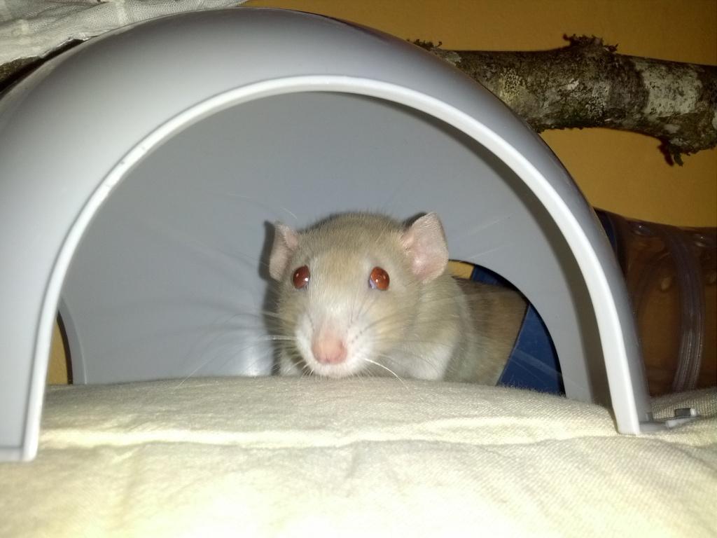 Mes 3 ratounes tant attendues IMG_20120908_211812
